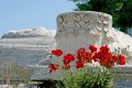 Corinthian marble column and poppys, Corinth