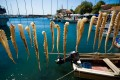 Octopus tentacles drying in the sun, Lesvos island