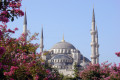 Famous Blue Mosque sightseeing also known as Sultanahmet Camii in Turkish, located in Istanbul, Turkey